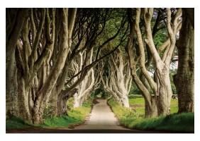Картина TREES III 120X80